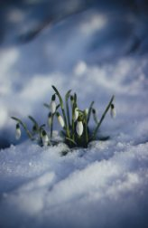 cold-flowers-grass-86580